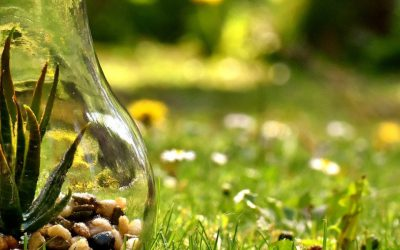 Jaką lampę wybrać do oświetlania domowych upraw roślin?