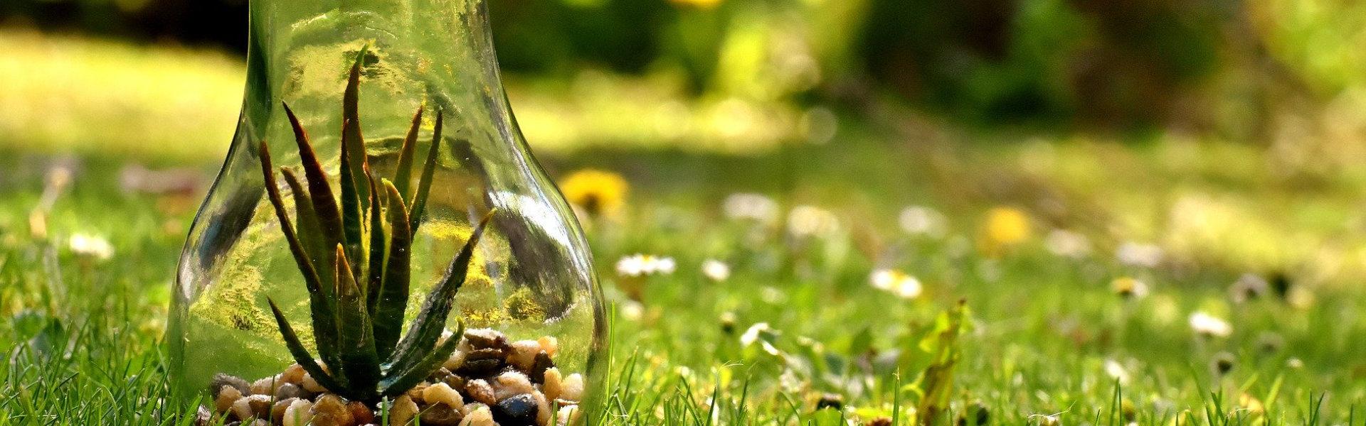 Jak dobrać oświetlenie do uprawy roślin w domu?