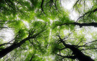 Dlaczego rośliny potrzebują słońca do kiełkowania?