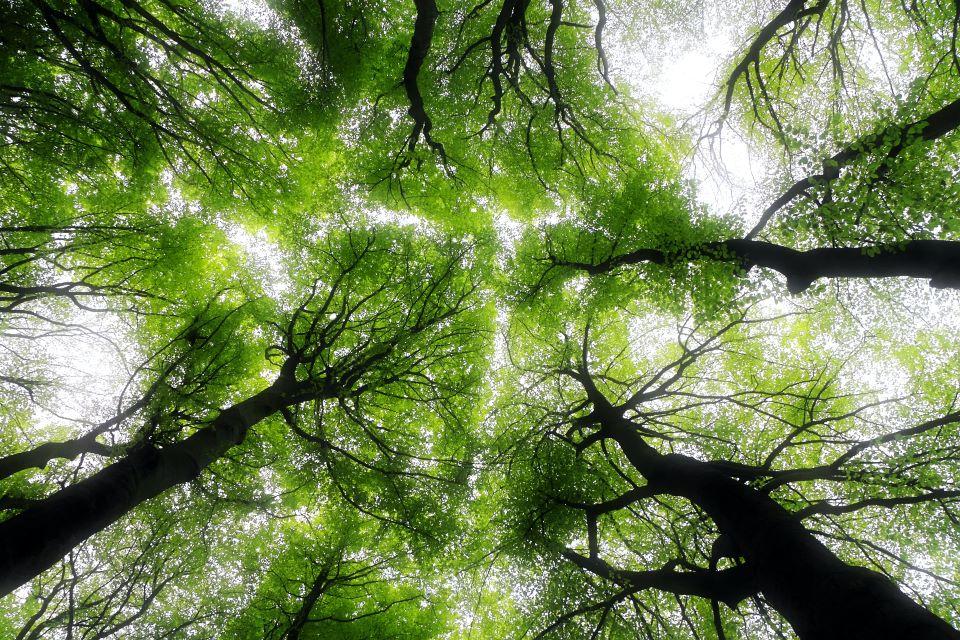 Rośliny potrzebują światła do kiełkowania i wzrostu
