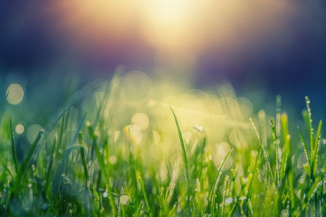 Wpływ słońca na rośliny